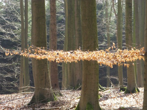 Winter 08 - Frhling 09 096.jpg